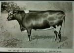 Mr Bates' Pet, Duchess 34th cow