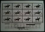 Gallop Motion Study